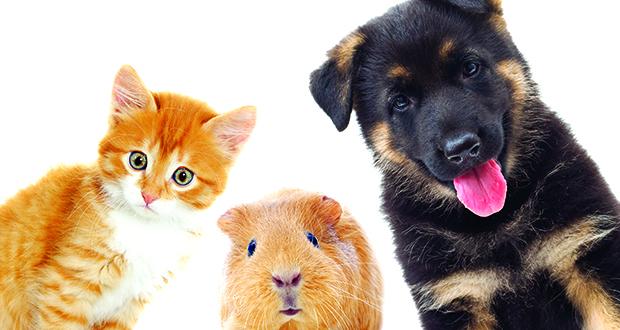pets-animals-620