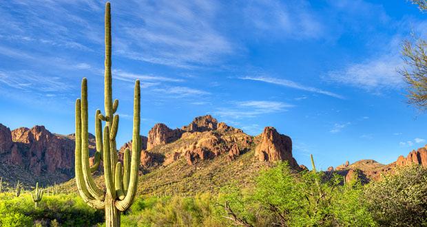 Saguaro catching day's last rays.