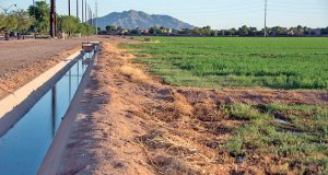 The Governor's Office is working to revamp the state's water laws. In this photo, an irrigation ditch provides water for a farm in the East Valley near Recker and Williams Field roads. (Photo by Ellen O'Brien/Arizona Capitol Times)